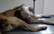 حملة تضامن ومسيرة احتجاجية بسبب كلب ضال